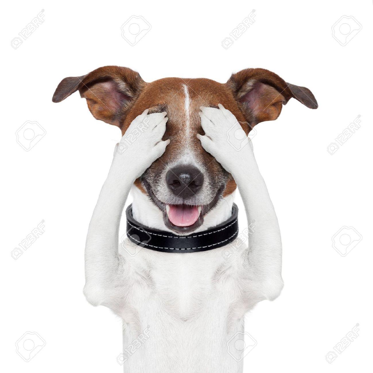 hiding covering both eyes dog Stock Photo - 15551833
