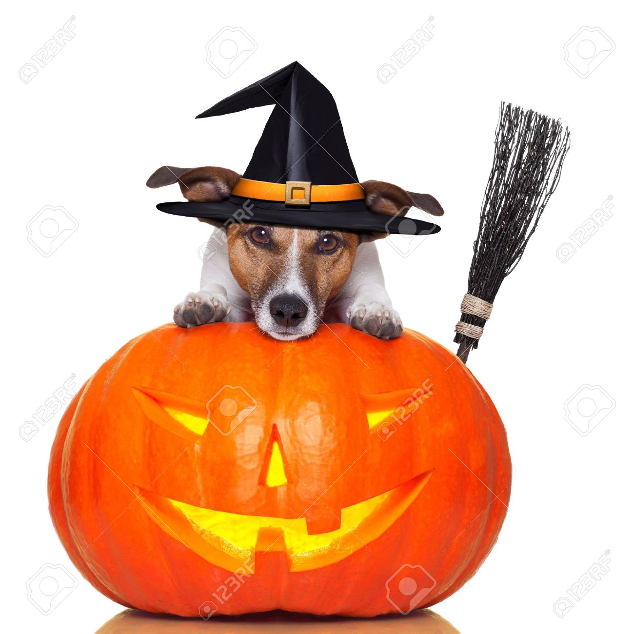 Halloween Dog Images & Stock Pictures. Royalty Free Halloween Dog ...