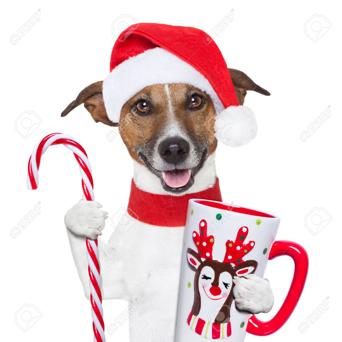 santa claus dog with sugar cane and cup Stock Photo - 16255591