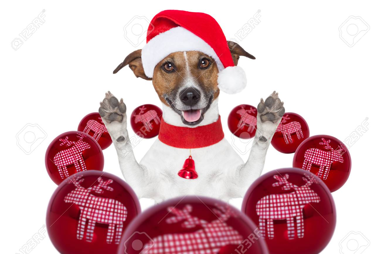 christmas dog with santa hat and balls around Stock Photo - 16255593