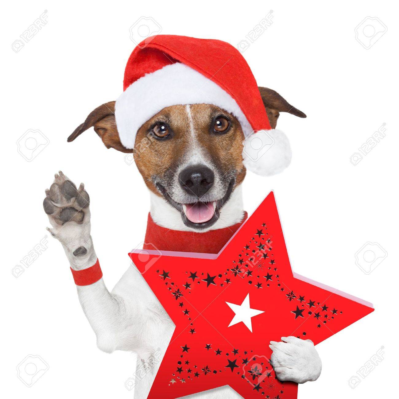 surprise christmas dog with a red present box Stock Photo - 16401584