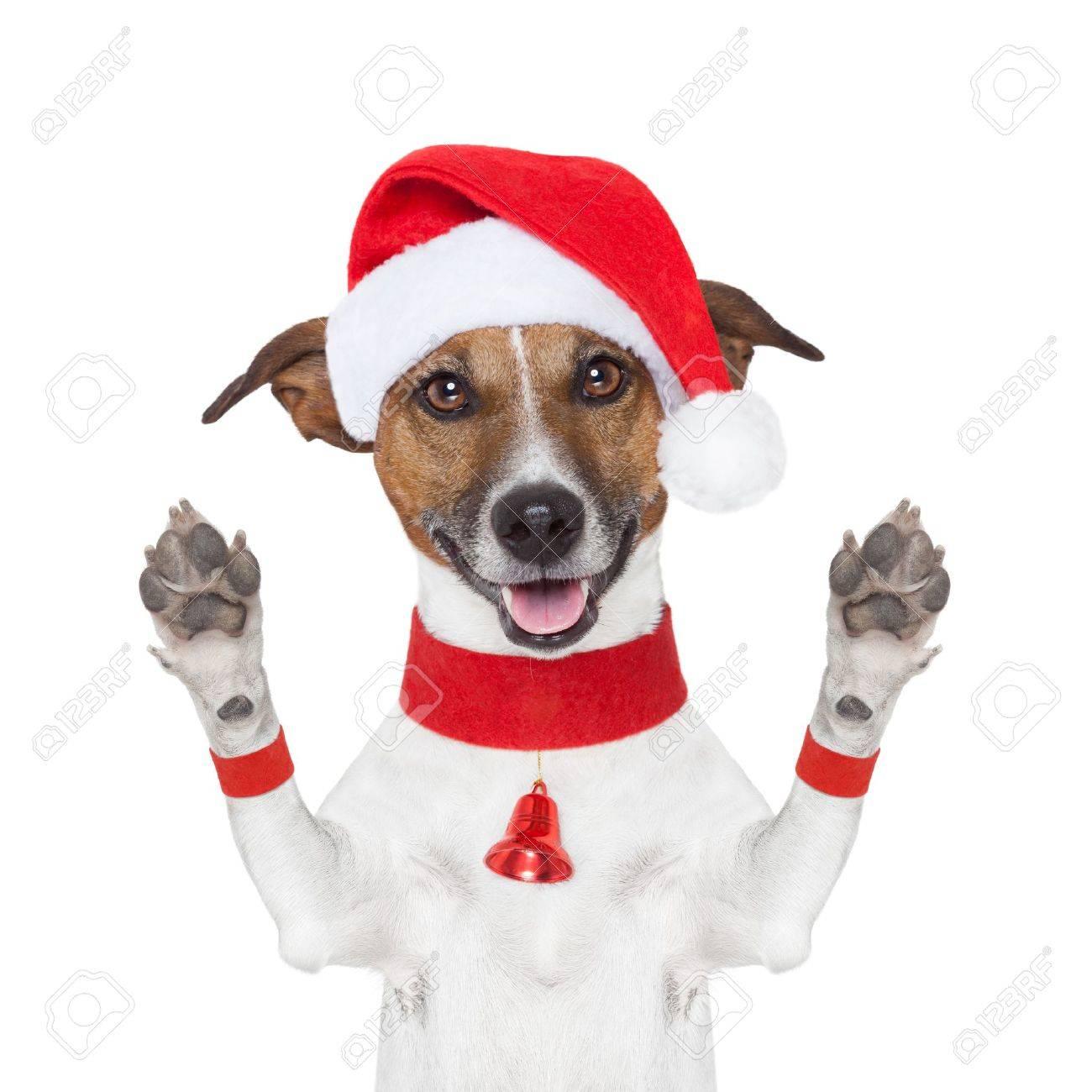 Bonjour Au Revoir High Five Chien De Noël Avec Des Pattes Jusqu à