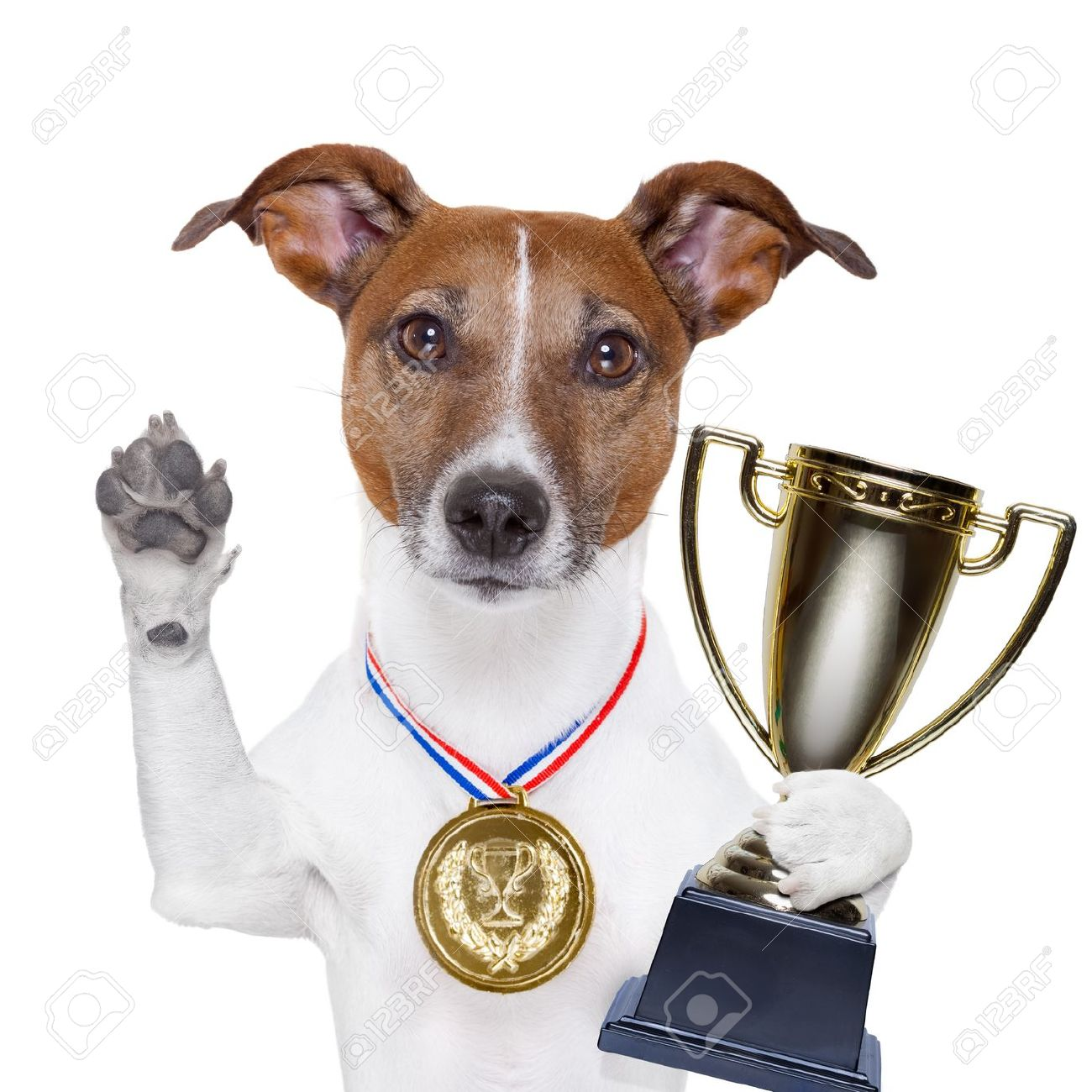 [Image: 17712454-champion-winning-dog-with-a-gold-medal.jpg]