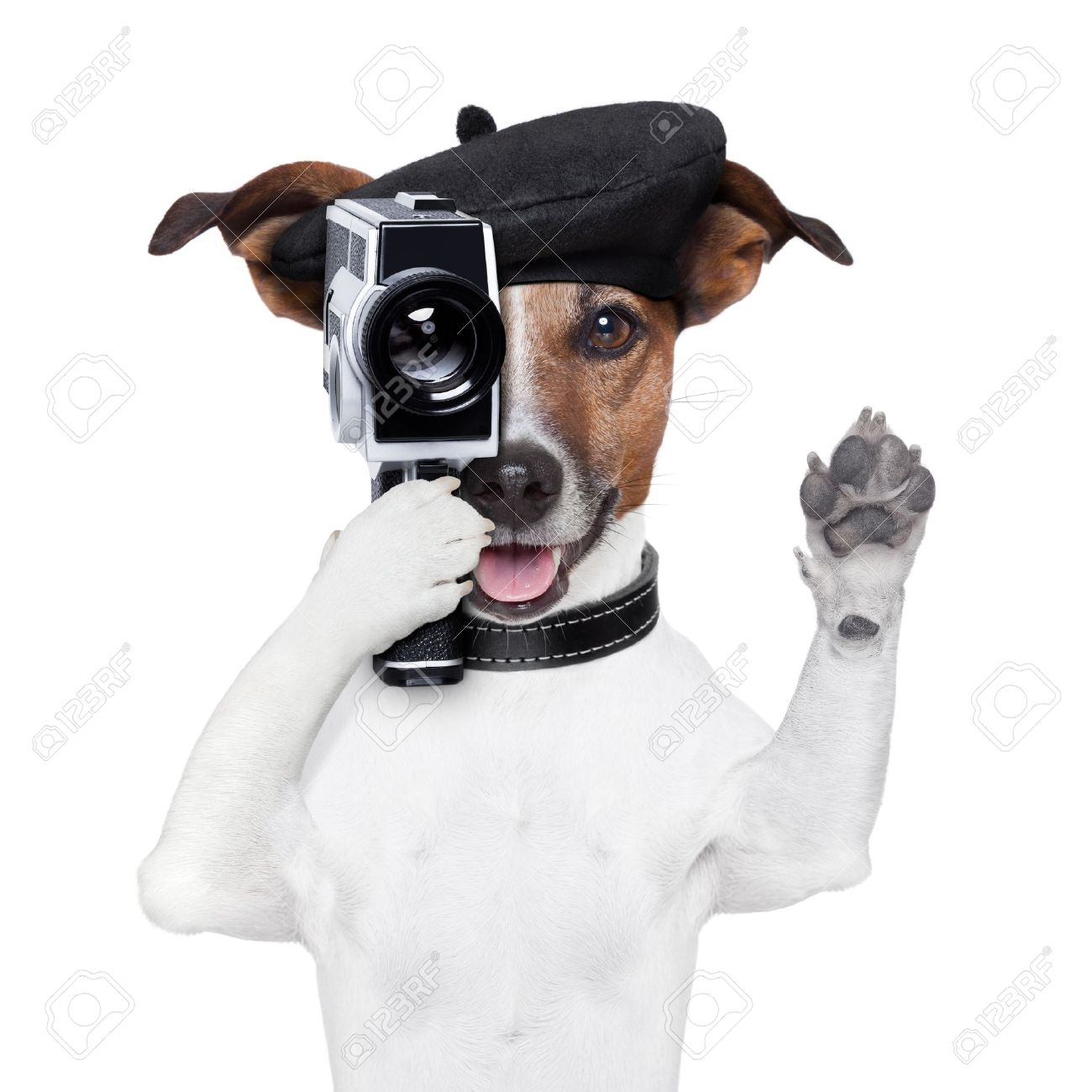 movie director dog with a vintage camera Stock Photo - 17882434