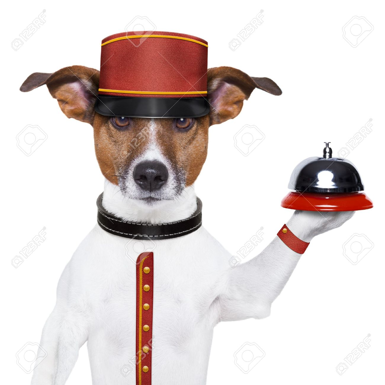 bellboy dog holding a bell with red hat Stock Photo - 17882472