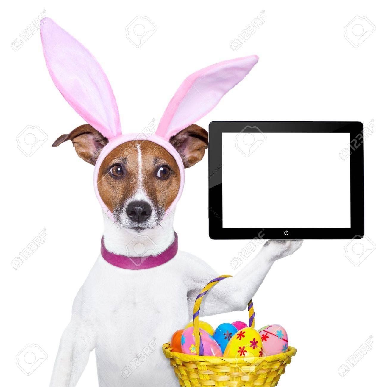 funny easter stock photos royalty free funny easter images and