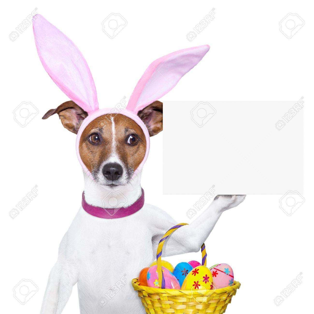 dog dressed up as bunny with easter basket and a banner Stock Photo - 18284712