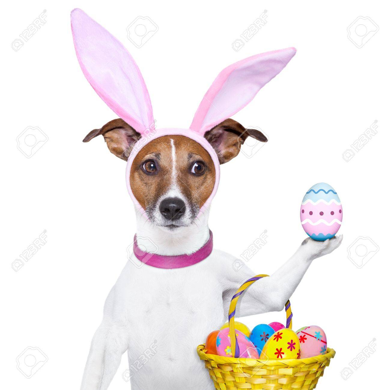 dog dressed up as bunny with easter basket Stock Photo - 18284714