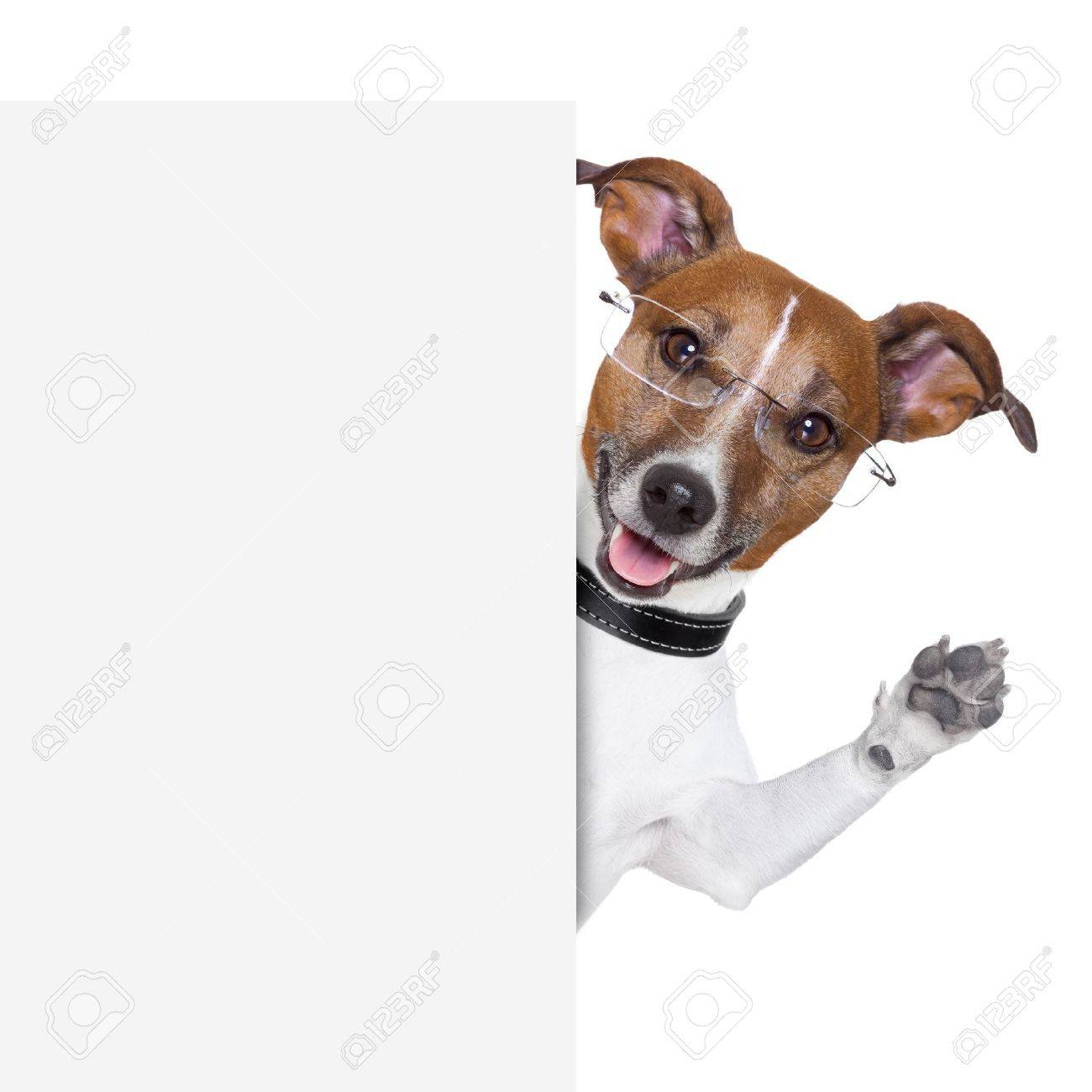 dog  with glasses behind a white banner waving Stock Photo - 18546052