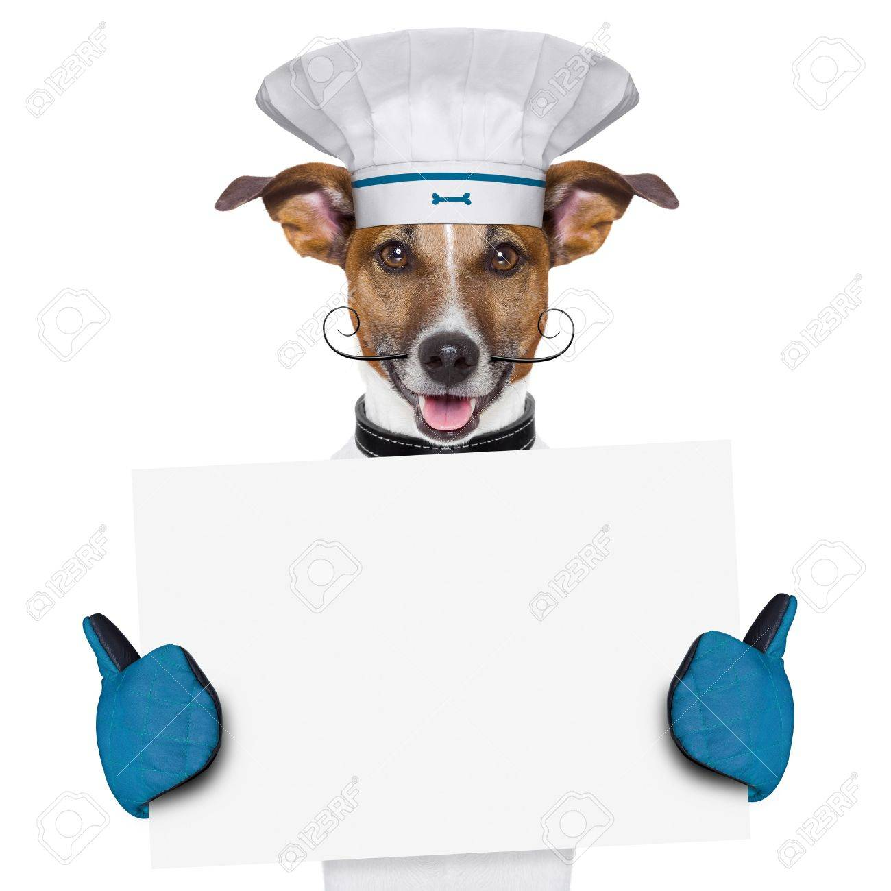 a cook dog holding an empty placard Stock Photo - 18588504