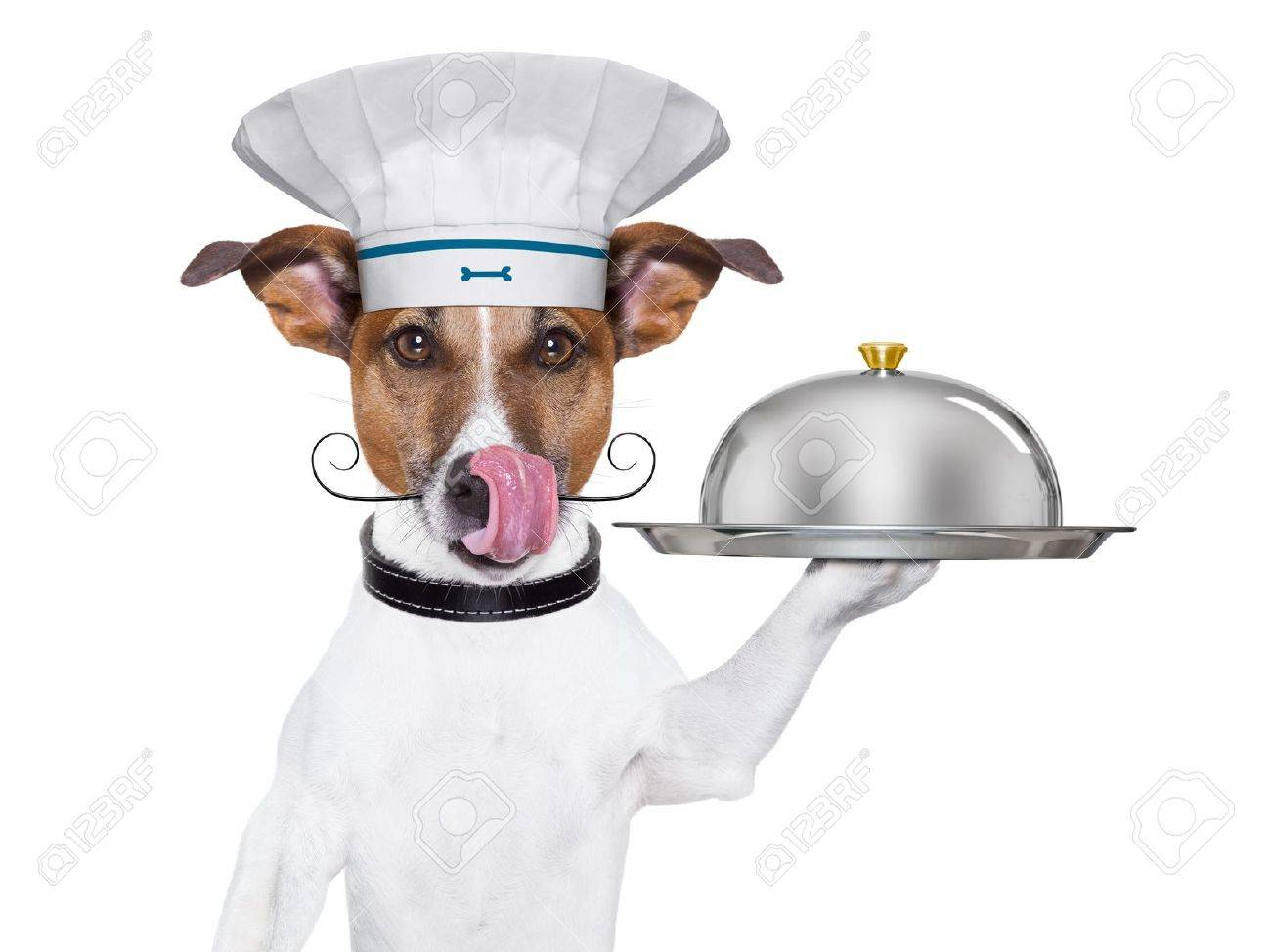 cook dog holding a serving tray with cover Stock Photo - 18589467