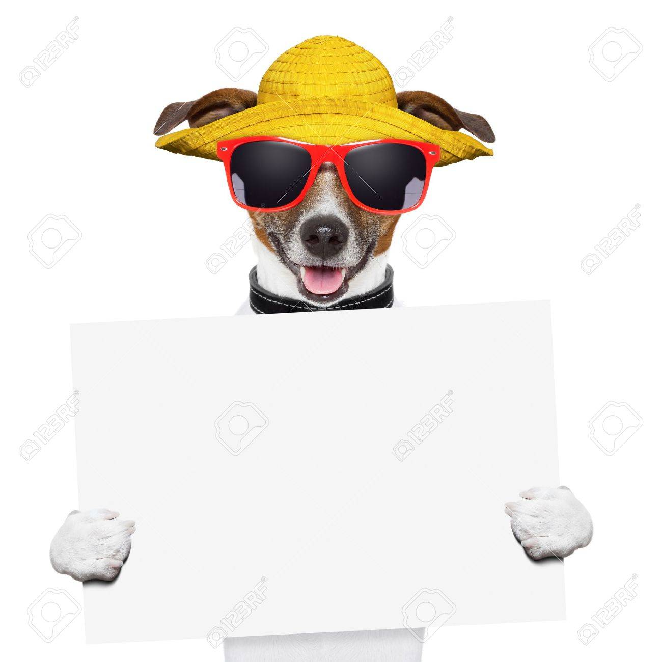 funny summer dog holding a blank banner Stock Photo - 18648342