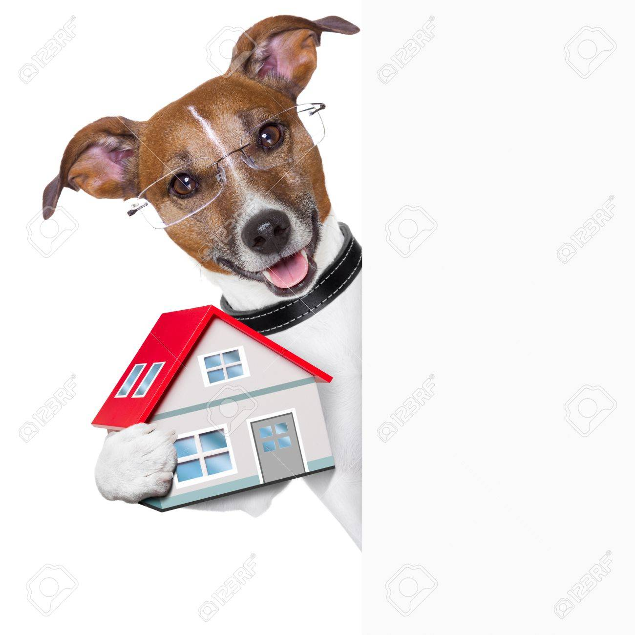 dog behind an empty placard with a small house Stock Photo - 18952081