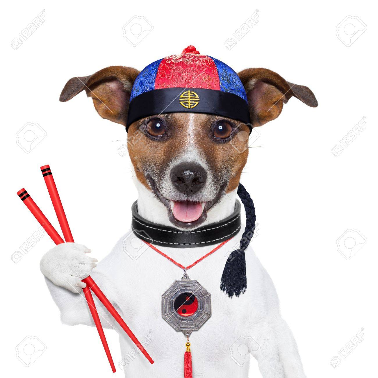 asian dog with chopsticks and asian hat Stock Photo - 19294018