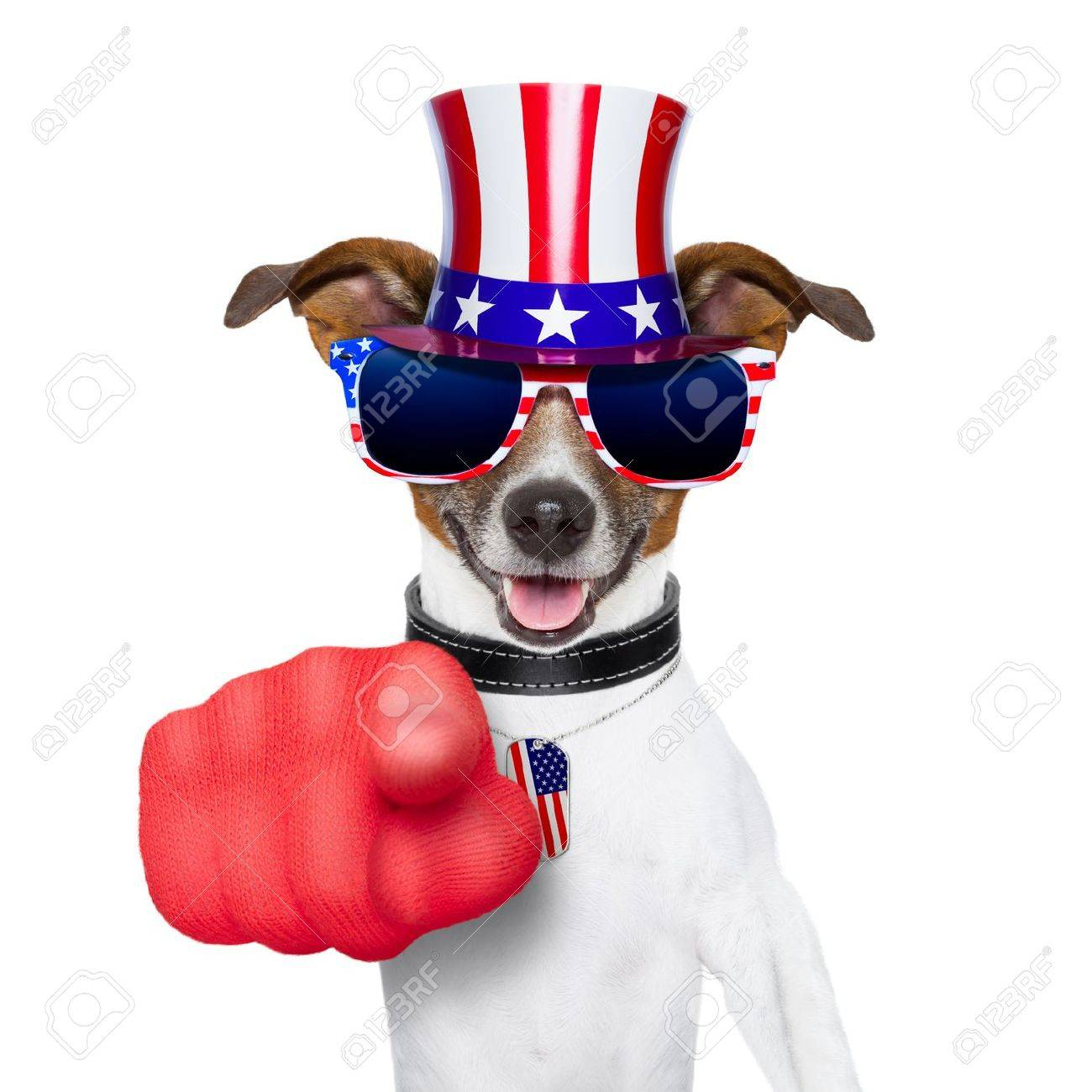 american dog pointing with  big finger at you Stock Photo - 19405268