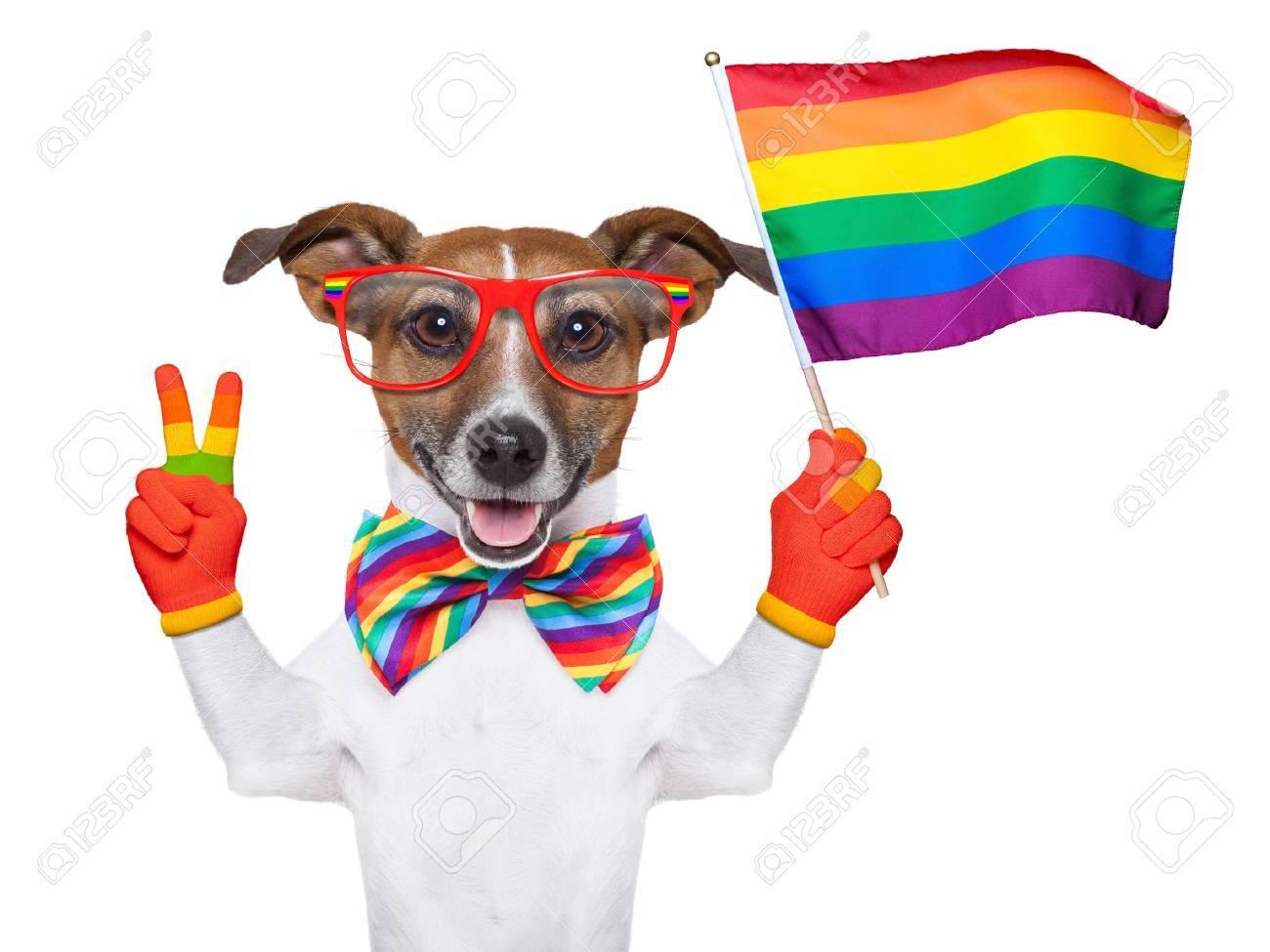 гей и пес