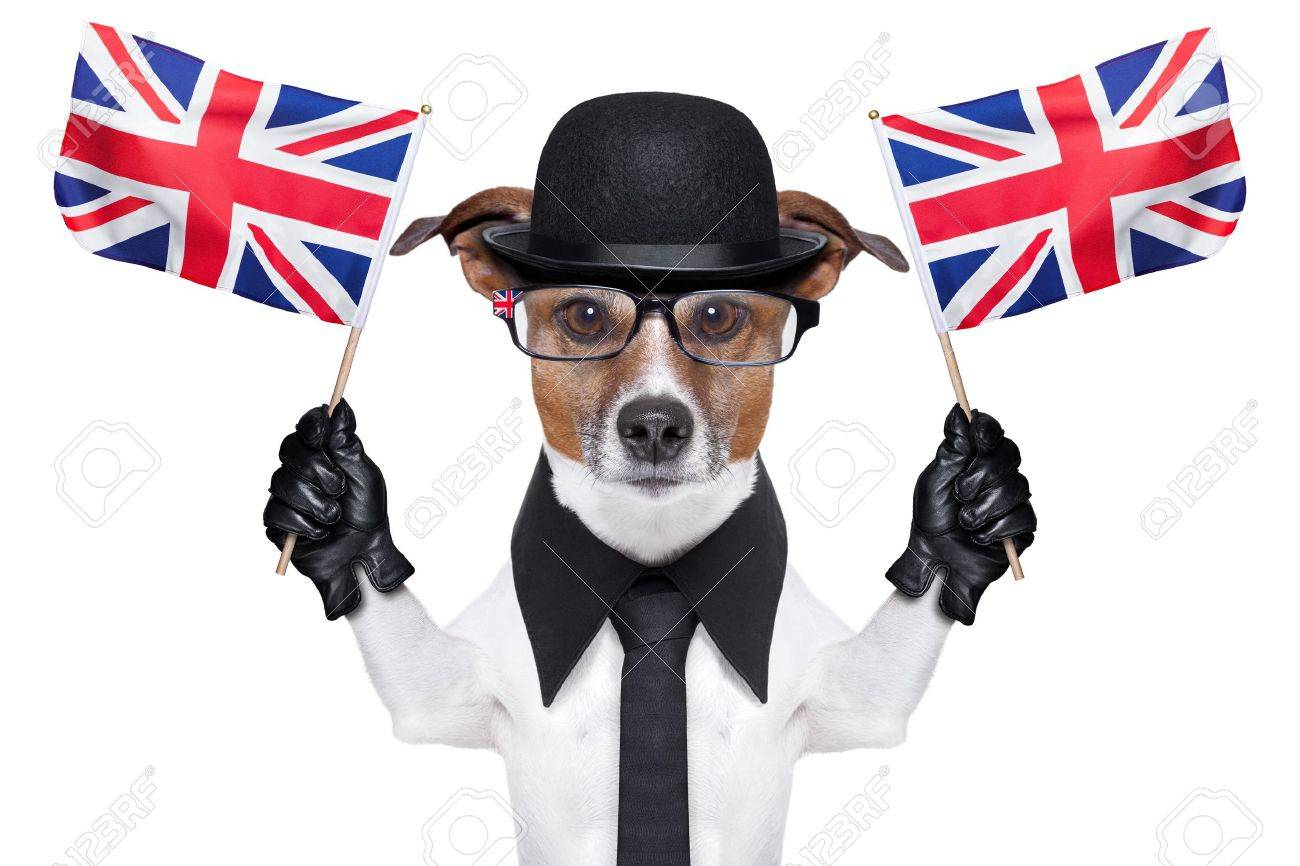 british dog with black bowler hat and black suit waving flags Stock Photo - 19632476