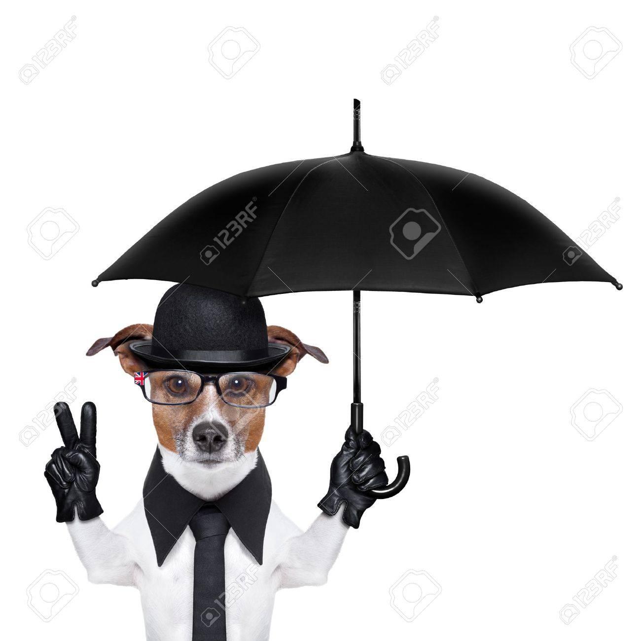 british dog with black bowler hat and black suit holding am umbrella Stock Photo - 19632475