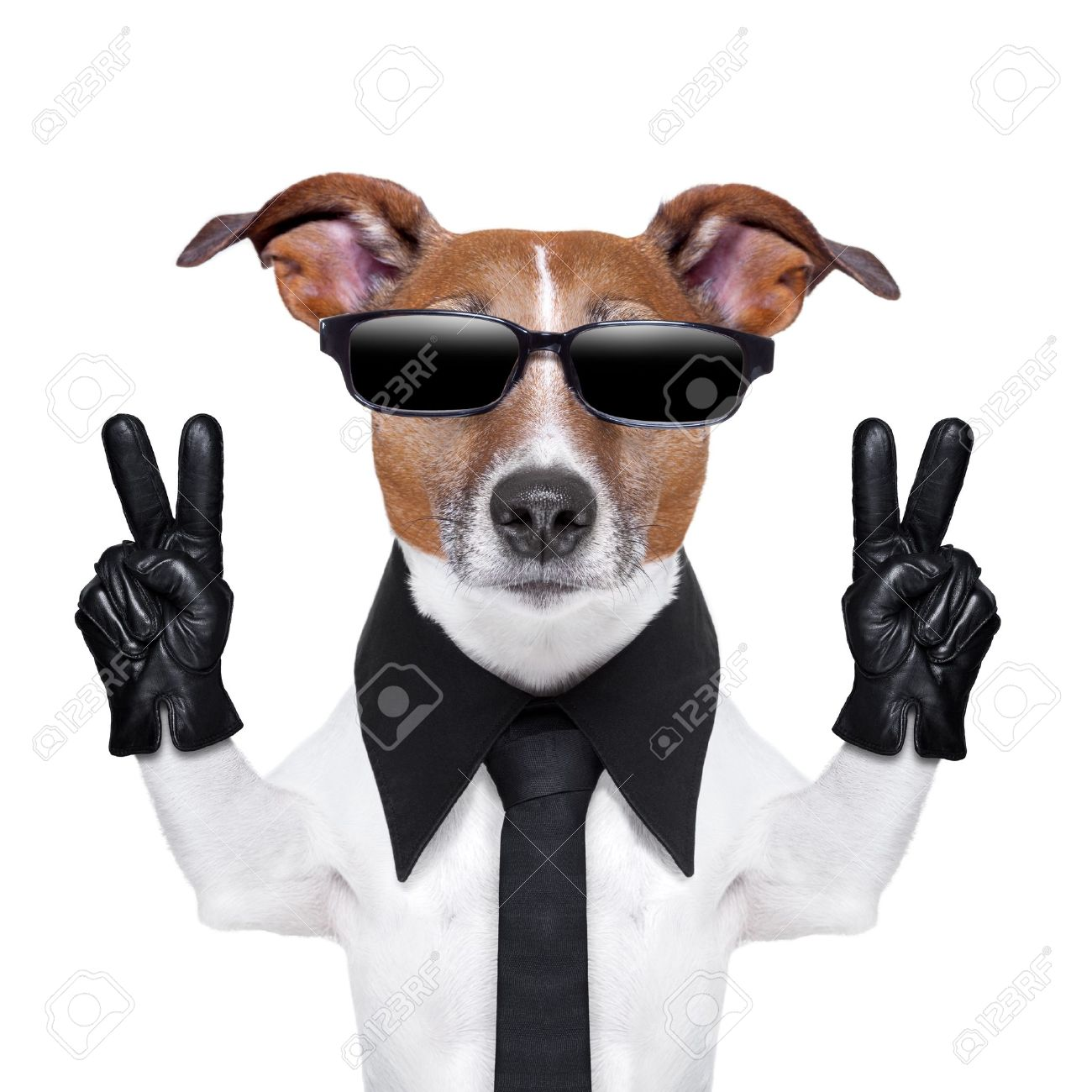 Black leather gloves with coloured fingers - Stock Photo Cool Dog With Peace Fingers In Black Leather Gloves