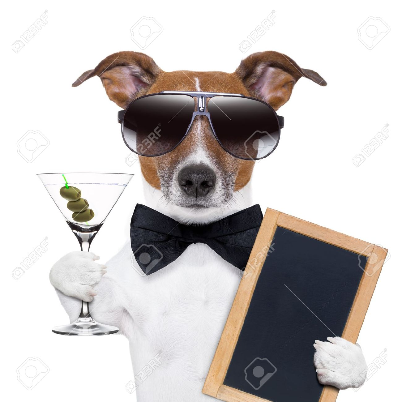 party dog toasting with a martini glass with olives Stock Photo - 20102683