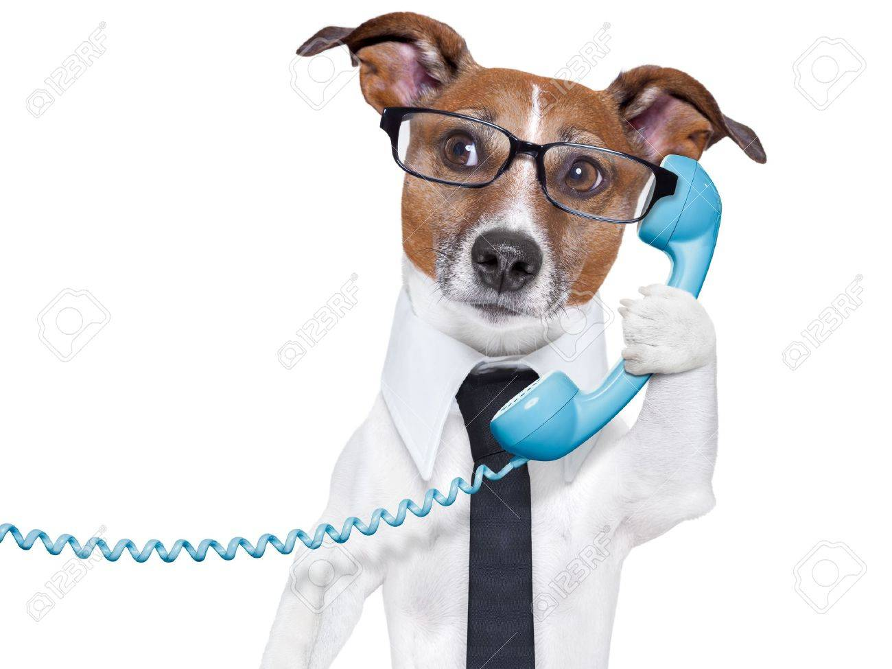 Business dog with a tie and glasses listening carefully on the business dog with a tie and glasses listening carefully on the phone stock photo 20102687 ccuart Choice Image