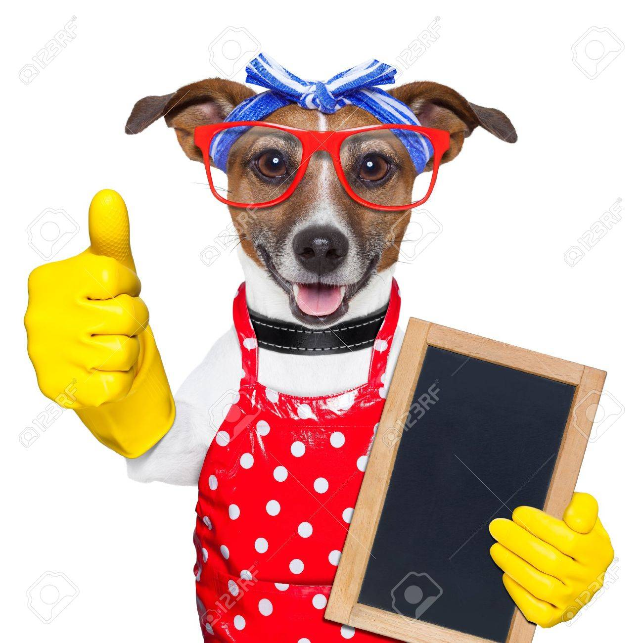 housewife dog with rubber gloves  and thumb up Stock Photo - 20313832