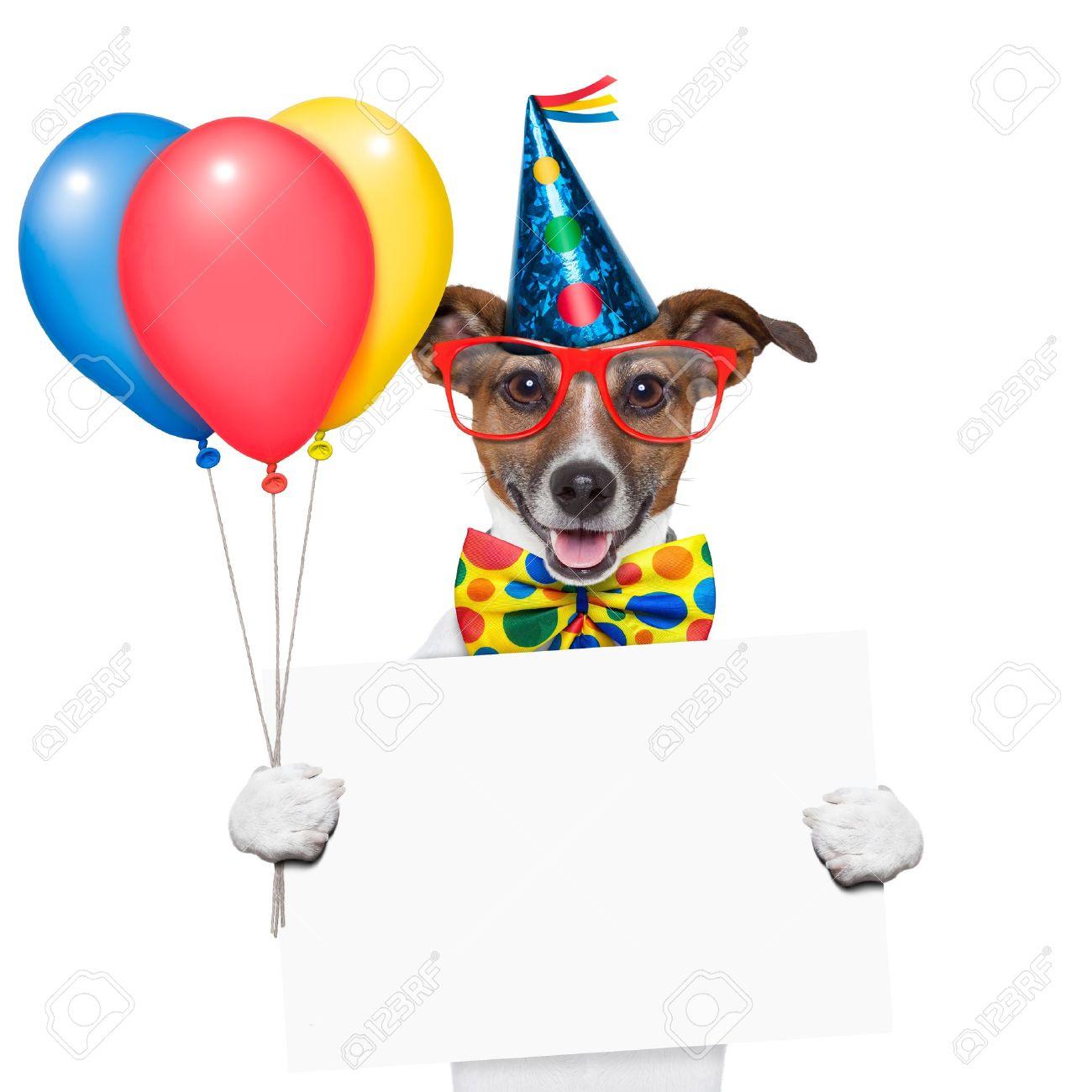 Geburtstag Hund Mit Luftballons Und Einem Weissen Plakat Lizenzfreie