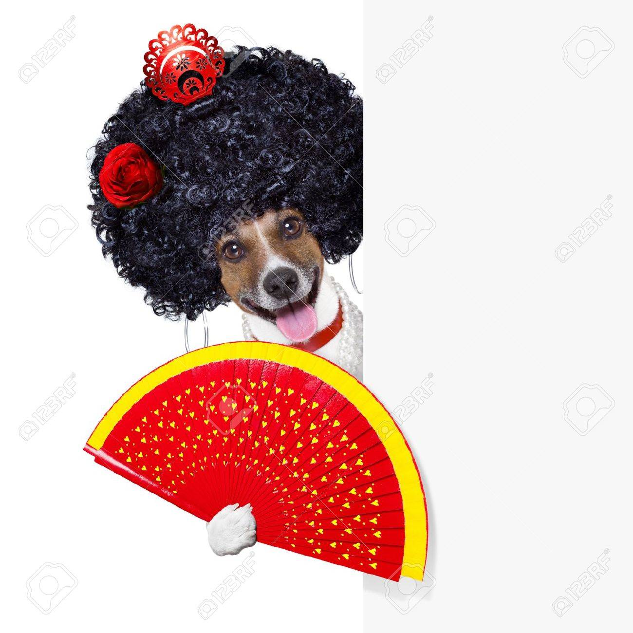 spanish flamenco dog with very big curly hair and hand fan behind banner placard Stock Photo - 20679855