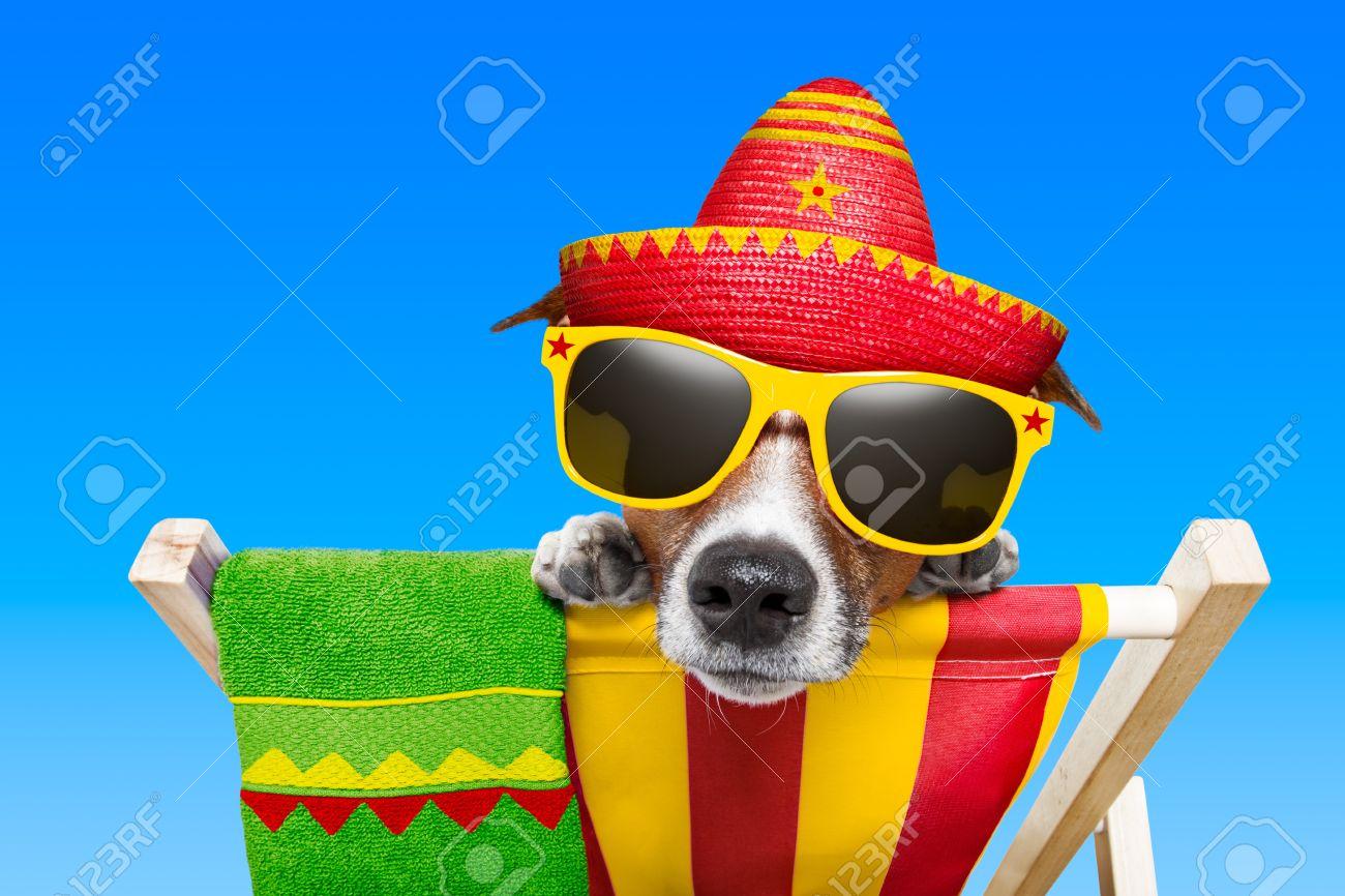 perro mexicano de vacaciones de relax en una silla de cubierta Foto de archivo - 20900251