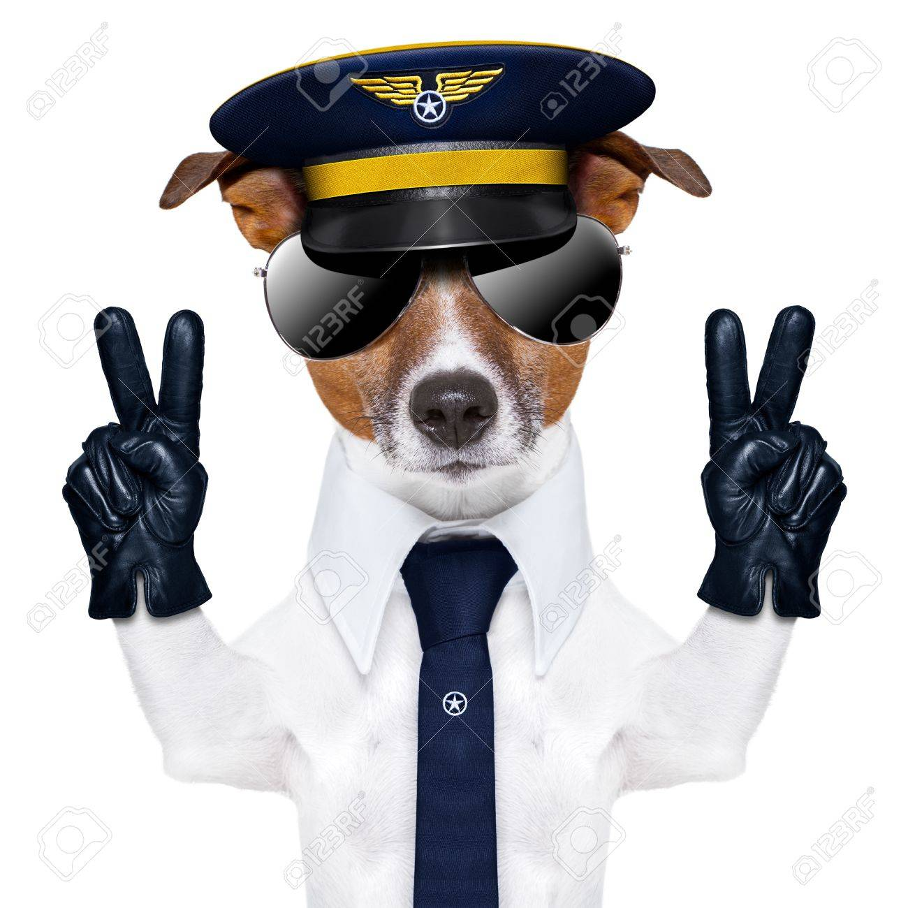 pilot captain dog with peace fingers and a blue tie Stock Photo - 21086297