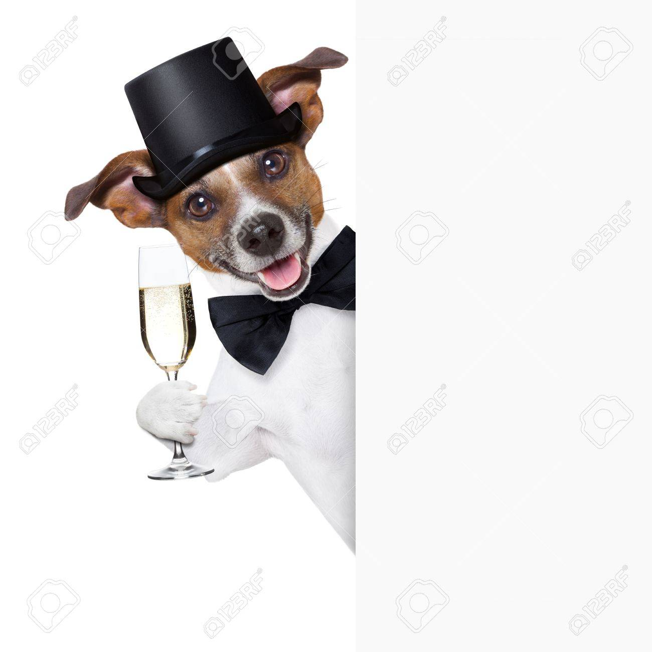 dog toasting with champagne glass behind  a white placard Stock Photo - 21377304