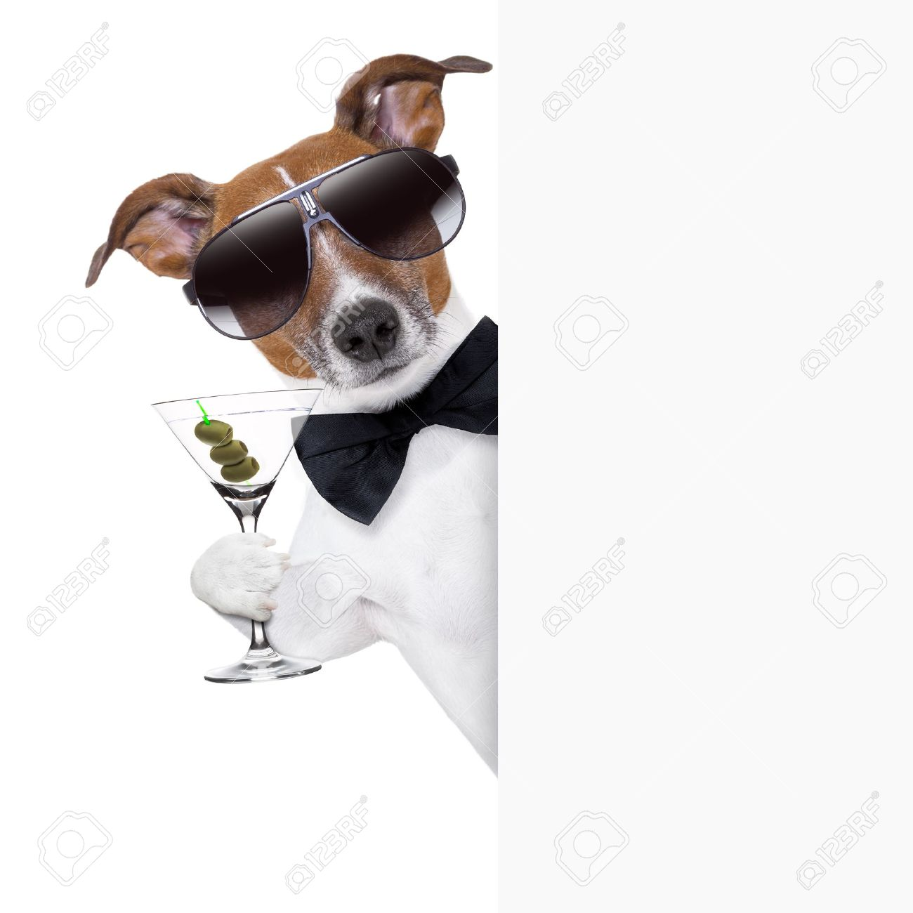 Stock Photo - dog toasting Funny Drinking Toasts