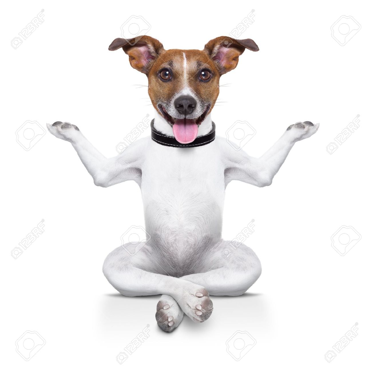 yoga dog sitting relaxed with happy face Stock Photo - 21377307
