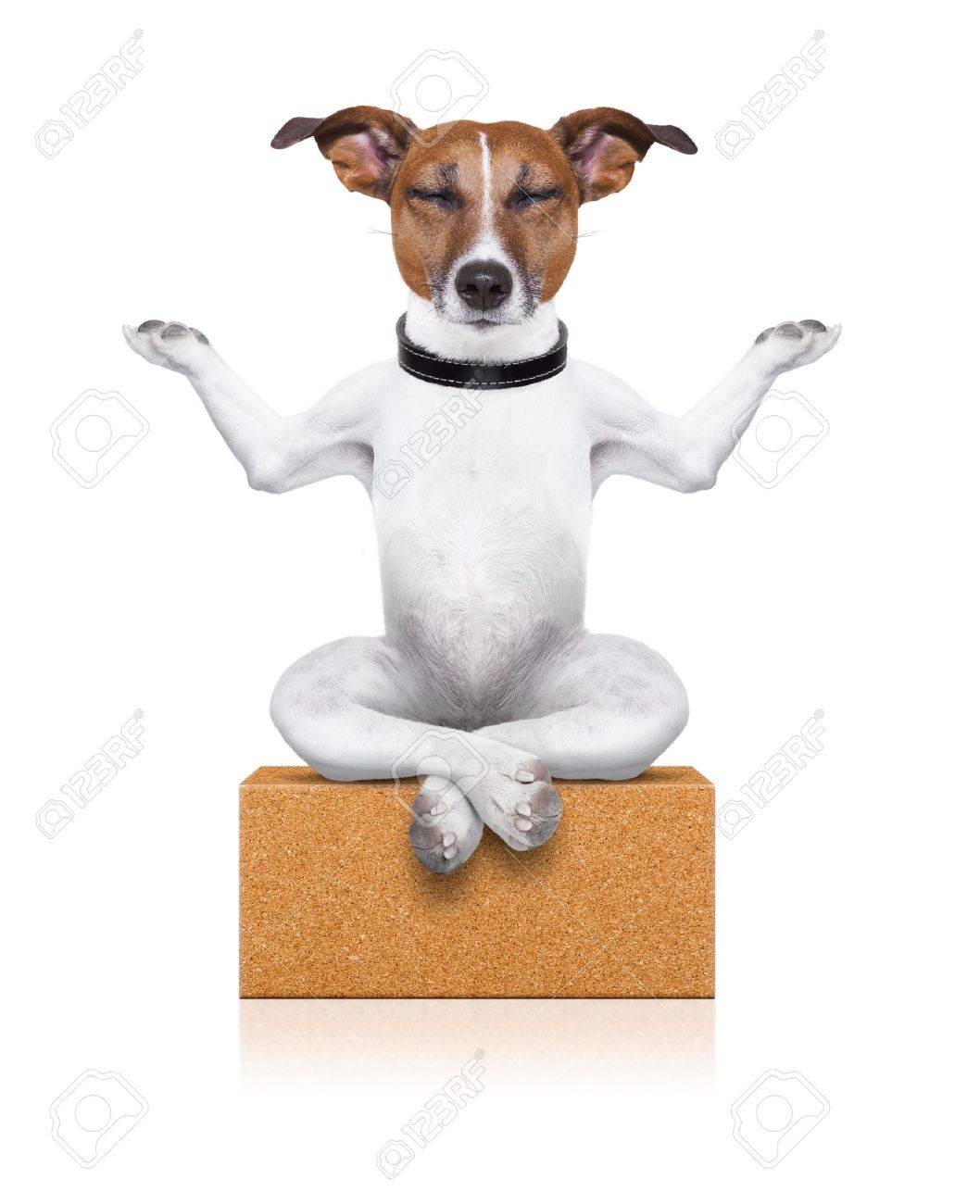 yoga dog sitting relaxed with closed eyes thinking deeply on a brick Stock Photo - 21377308