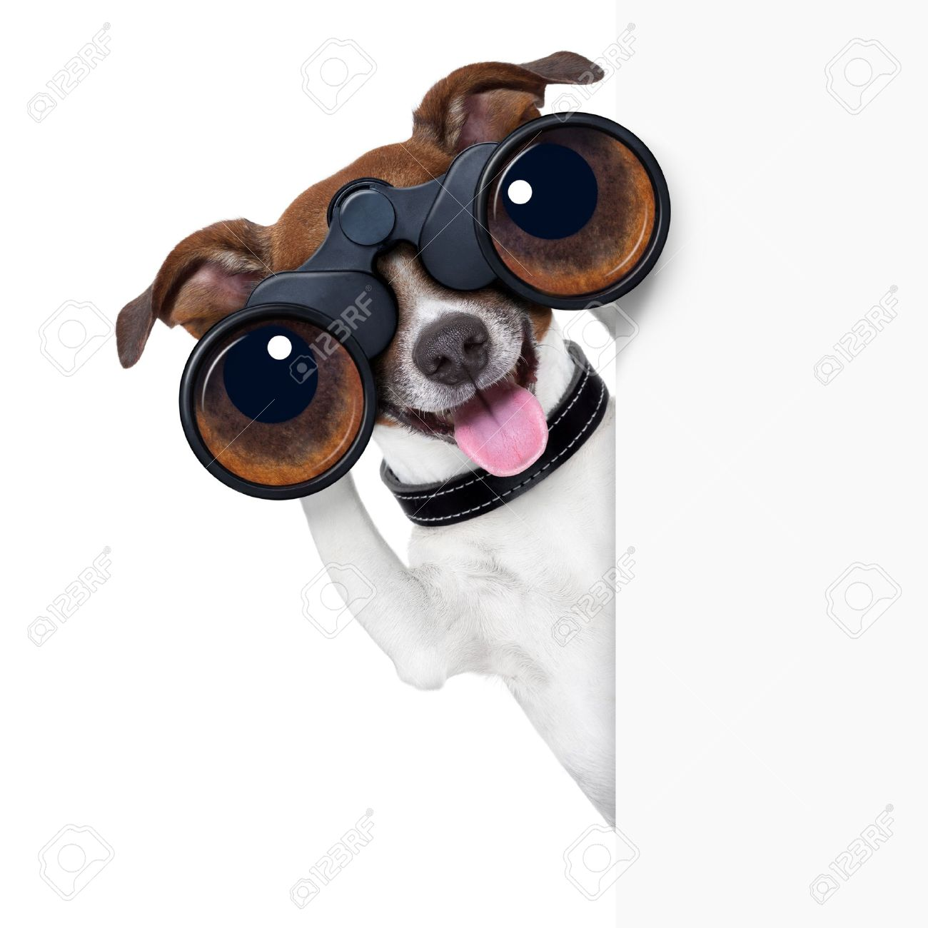 binoculars dog searching, looking and observing - 21377320