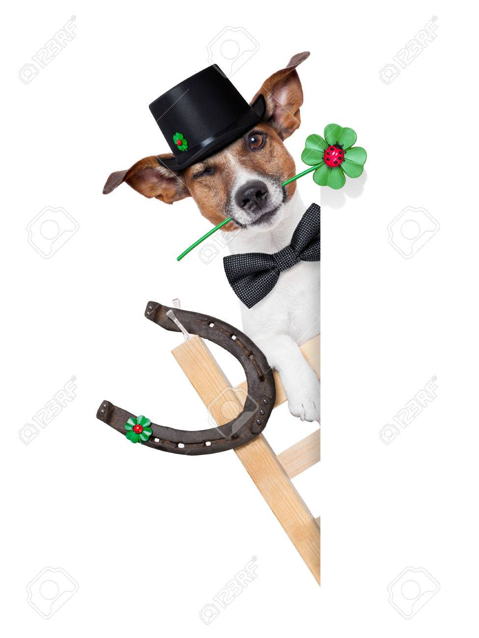 lucky chimney dog on a ladder with a four  leaf clover beside a blank banner Stock Photo - 22666444