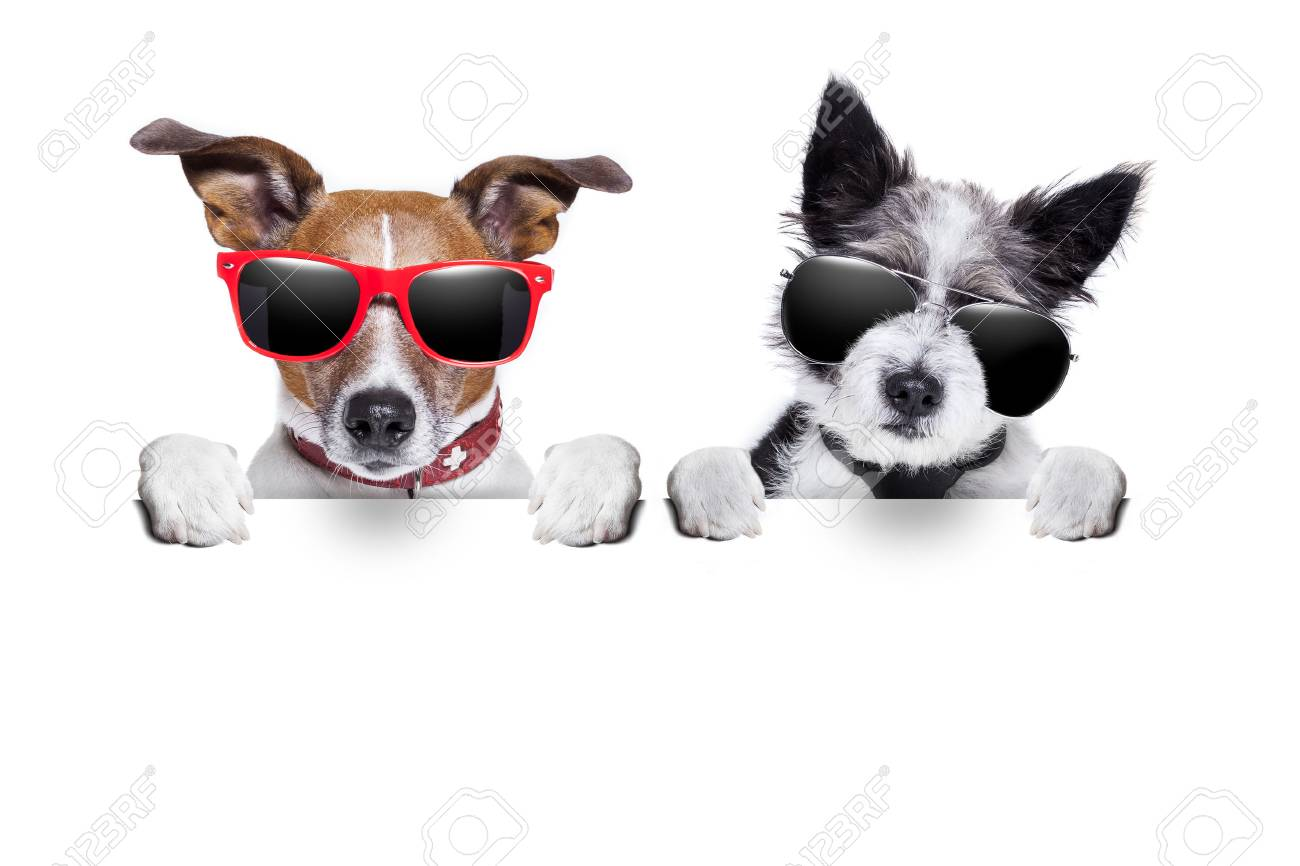two cute dogs  together behind  a blank placard Stock Photo - 22809587