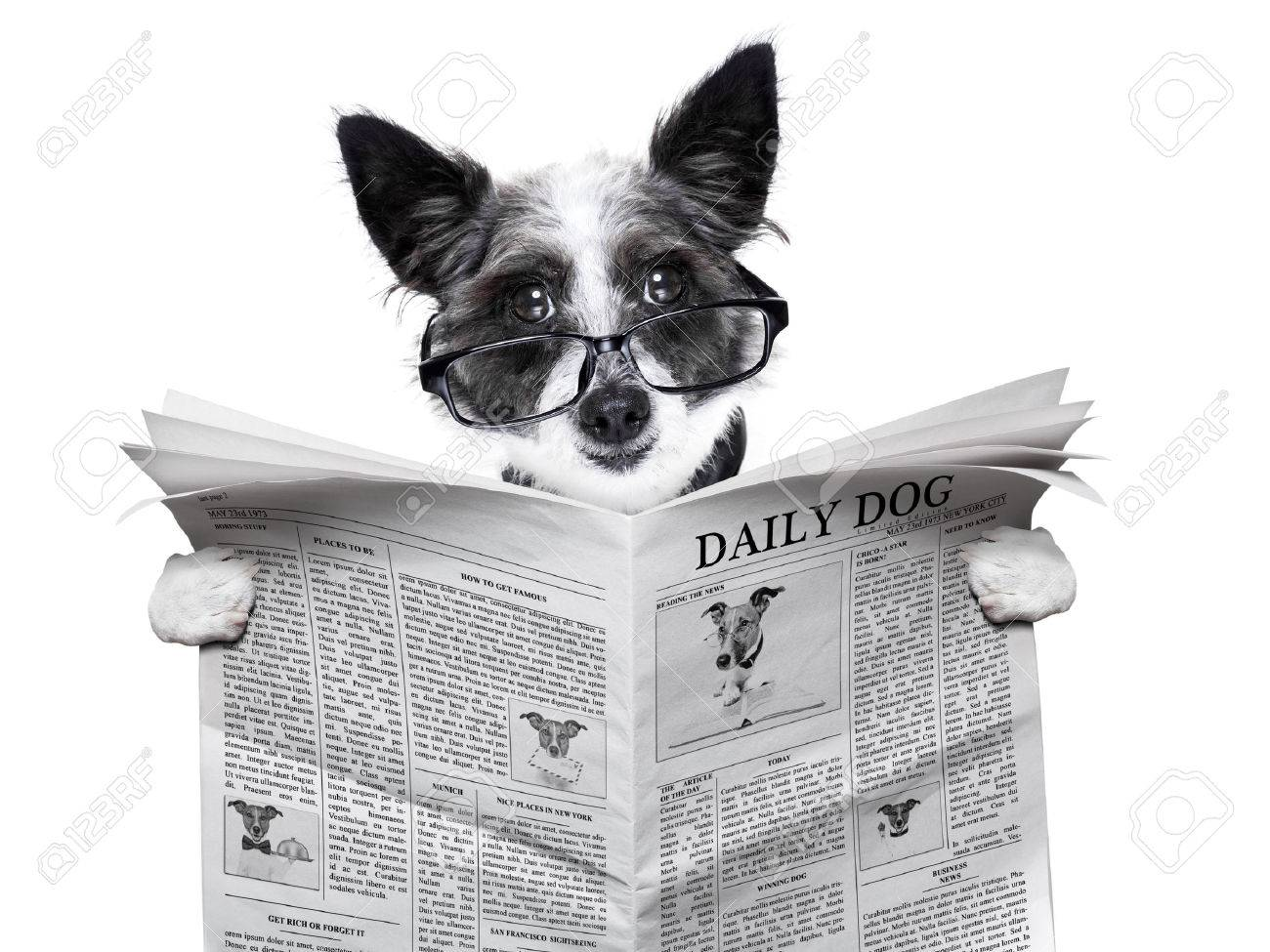 dog reading and holding a blank newspaper Stock Photo - 23374025