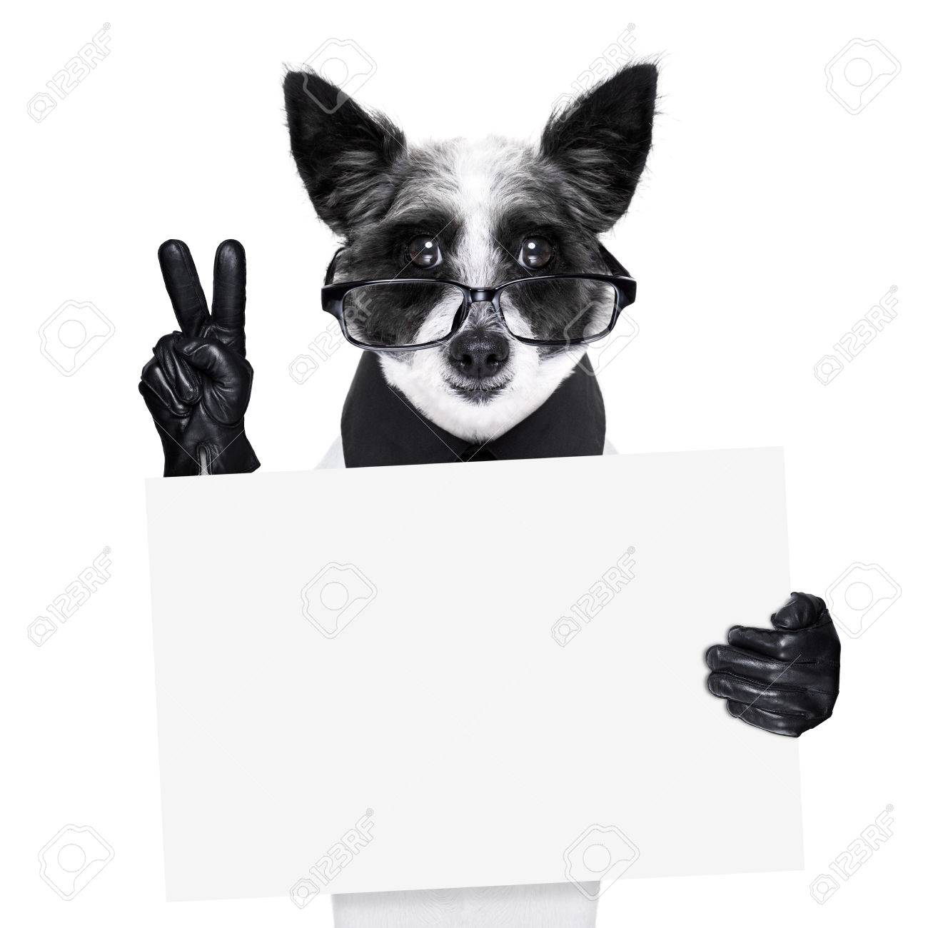 68a8684eed9a5 peace fingers dog with black gloves and glasses holding a banner Stock  Photo - 23482964