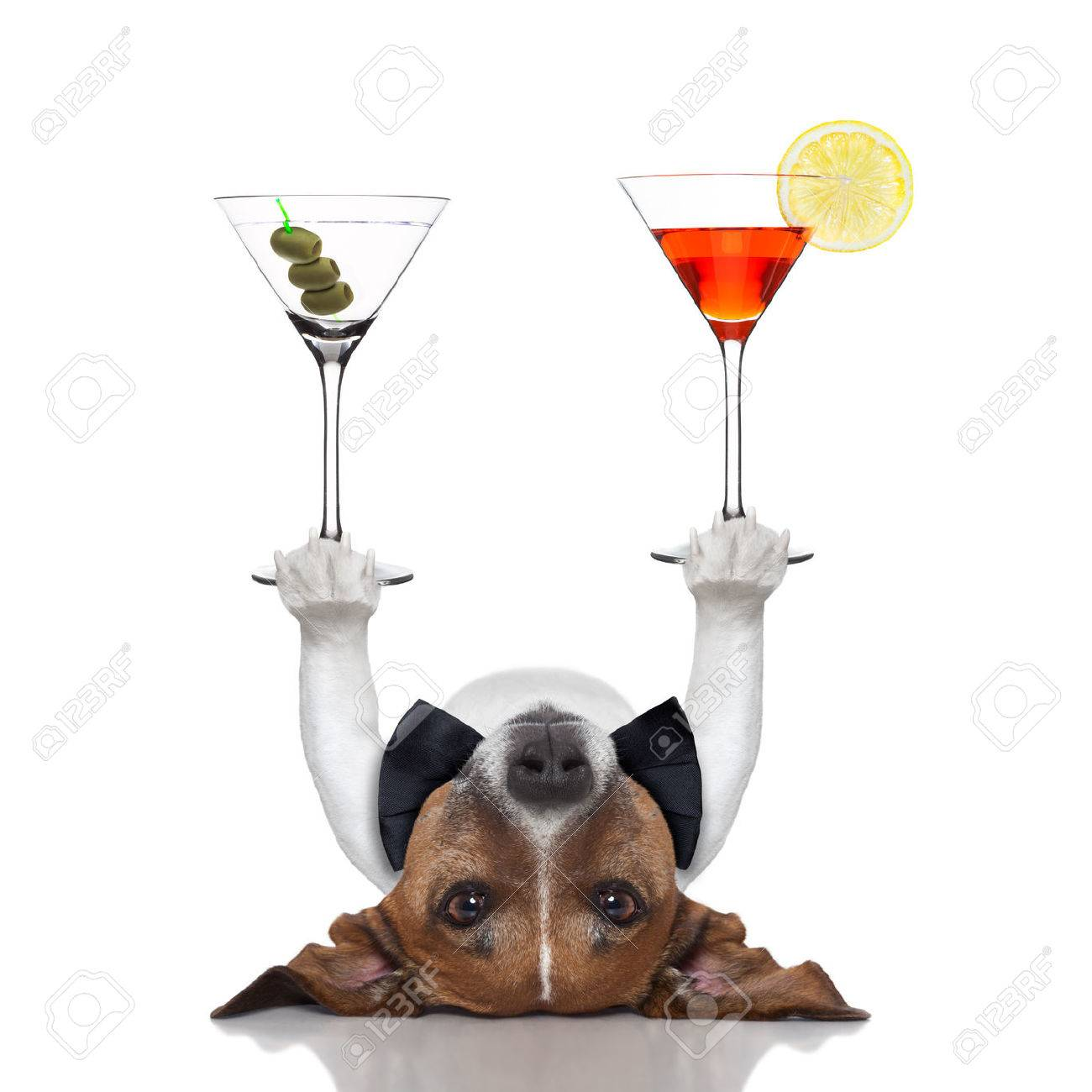 cocktail dog balancing two fancy martinis with paws Stock Photo - 23909438