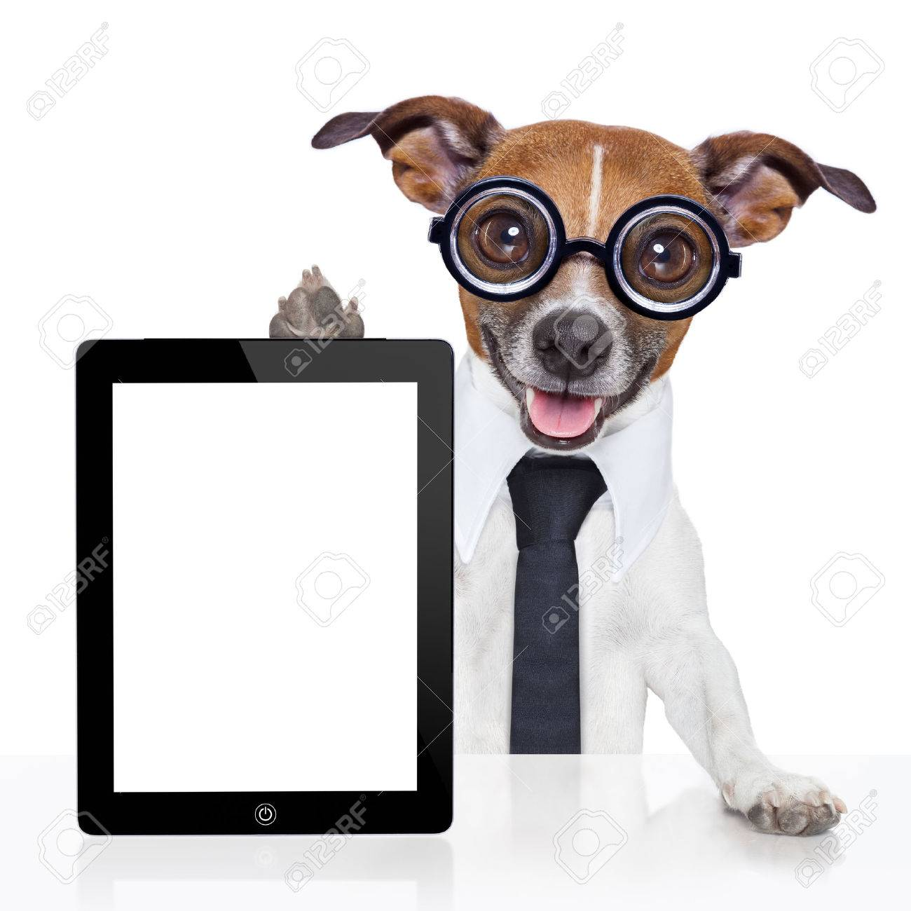 crazy business dog with a tie  and glasses Stock Photo - 25963768