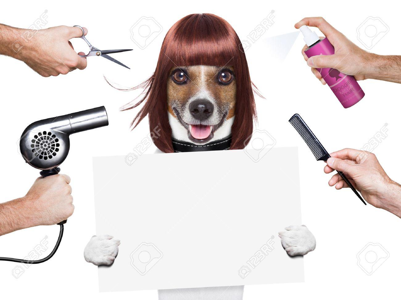 Friseur Hund Der Eine Weiße Und Leere Plakat Lizenzfreie Fotos