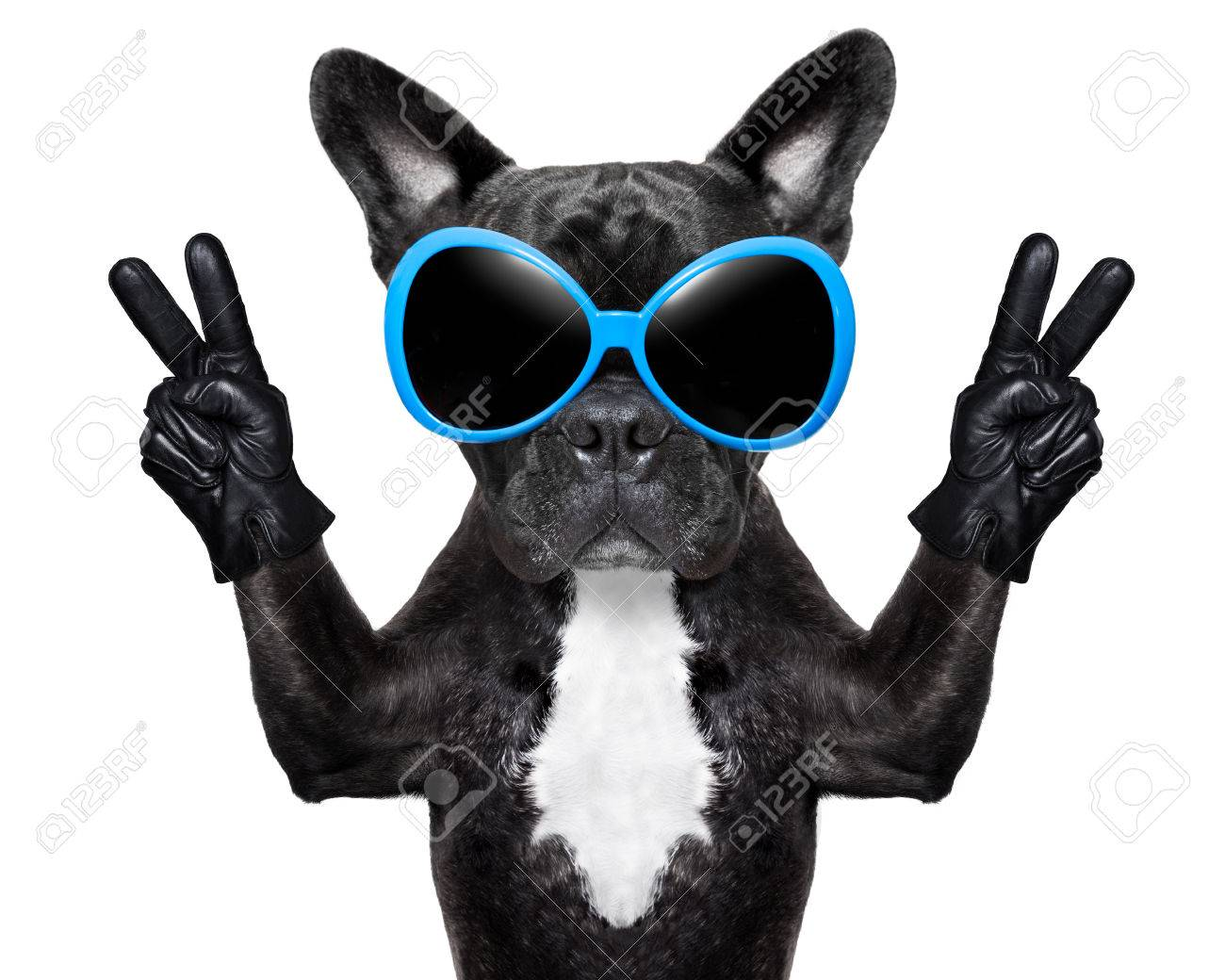 very cool dog with peace fingers wearing gloves and fancy sunglasses