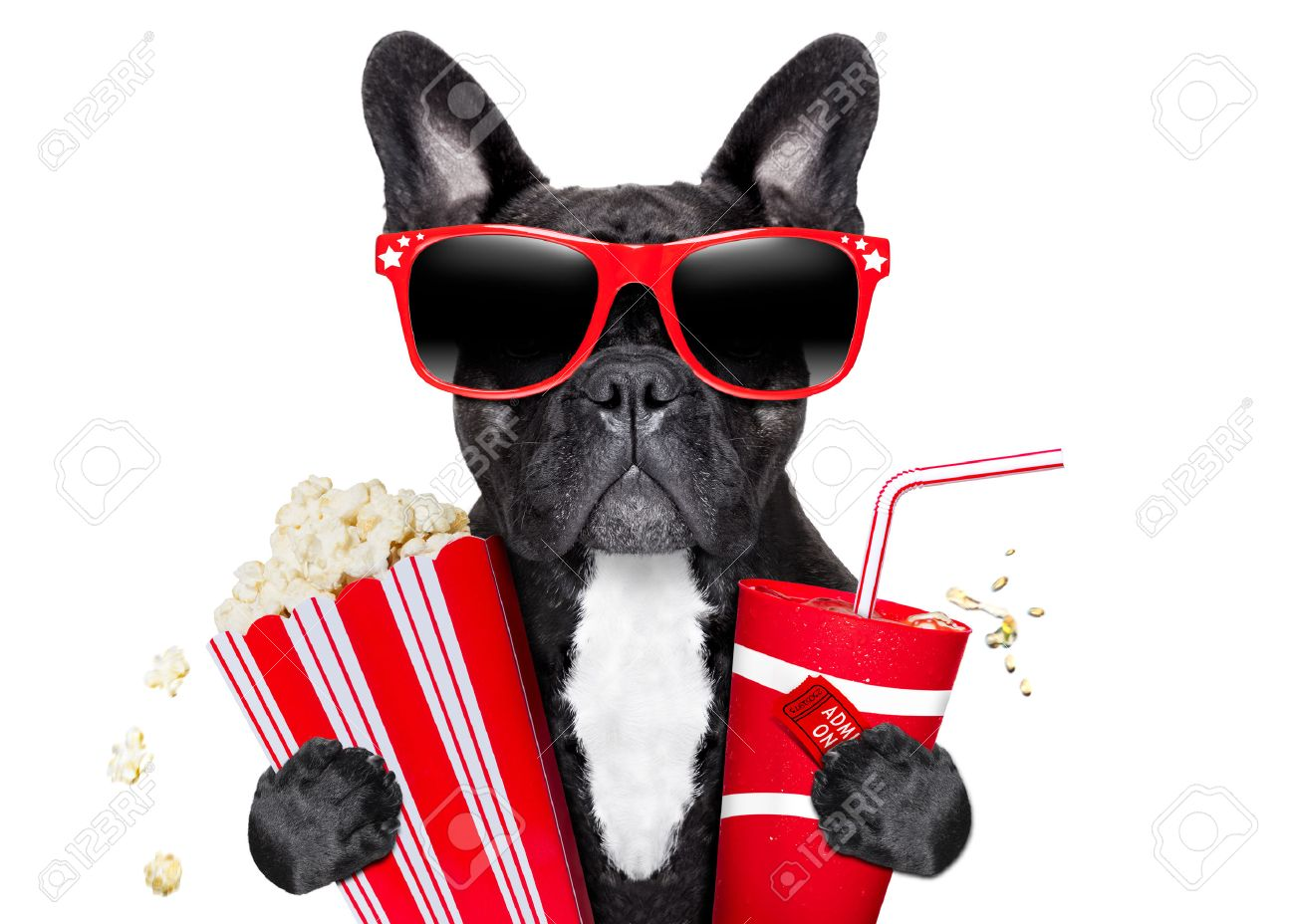 Worksheet Going To The Movies dog going to the movies with soda and glasses stock photo picture glasses