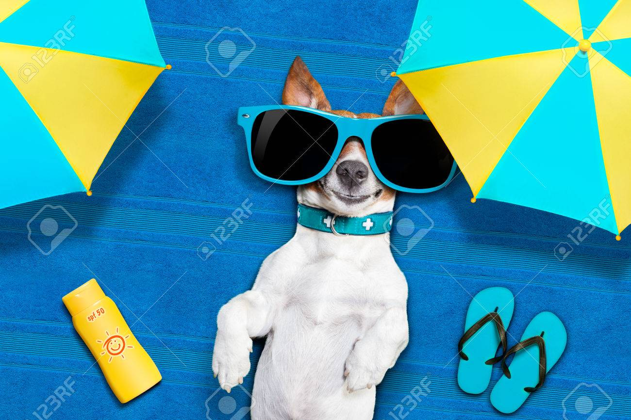 dog lying on towel under shade of umbrella relaxing and chilling