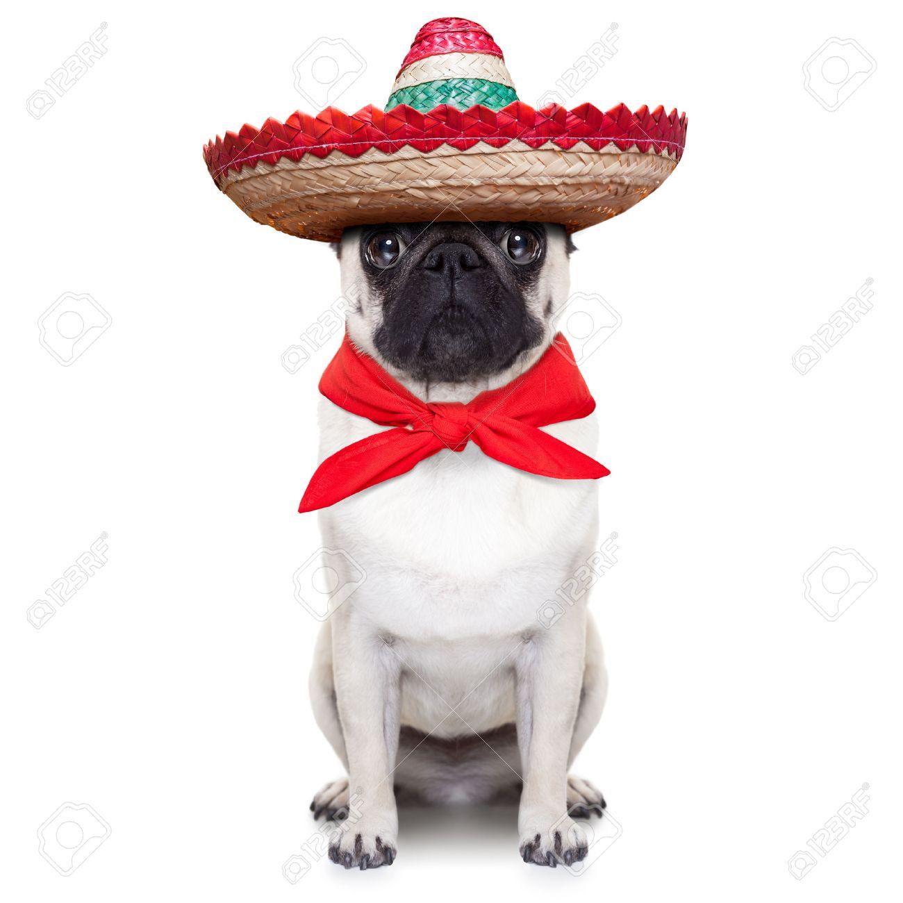 perro mexicano con el sombrero grande del sombrero y corbata roja Foto de archivo - 31119640