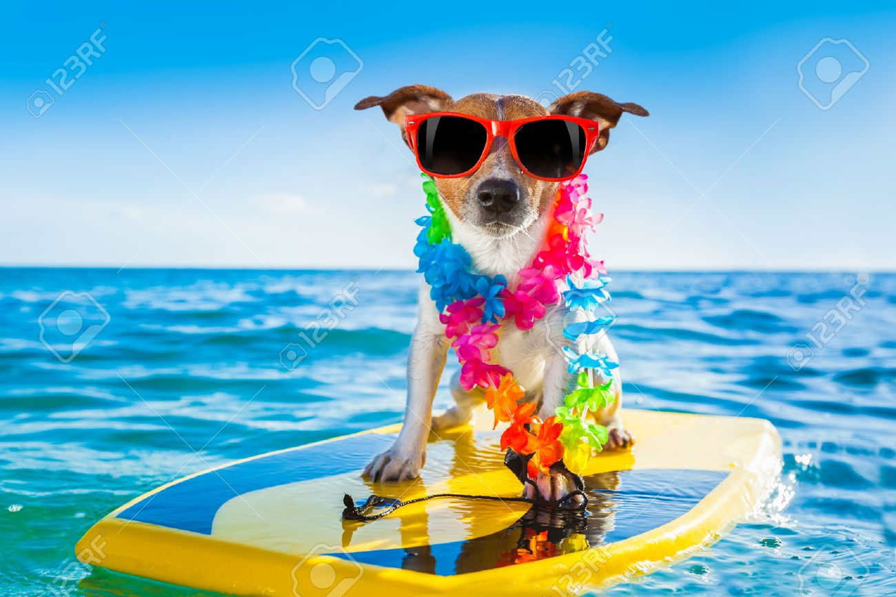 dog surfing on a surfboard wearing a flower chain and sunglasses, at the ocean shore - 32316466
