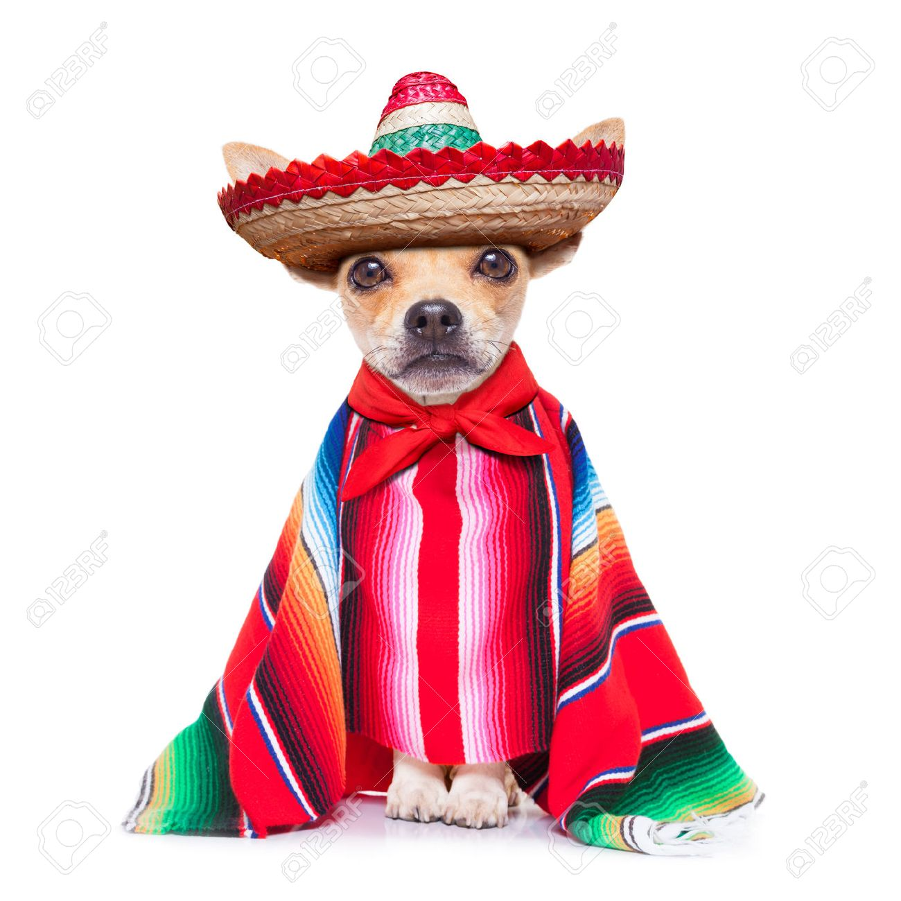 mexican stock photos u0026 pictures royalty free mexican images and