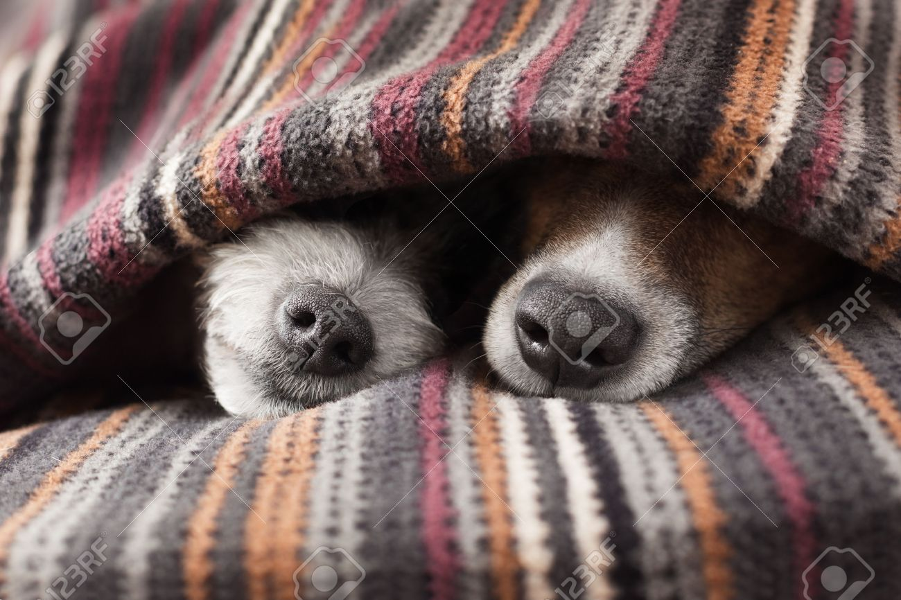 Любовь собак