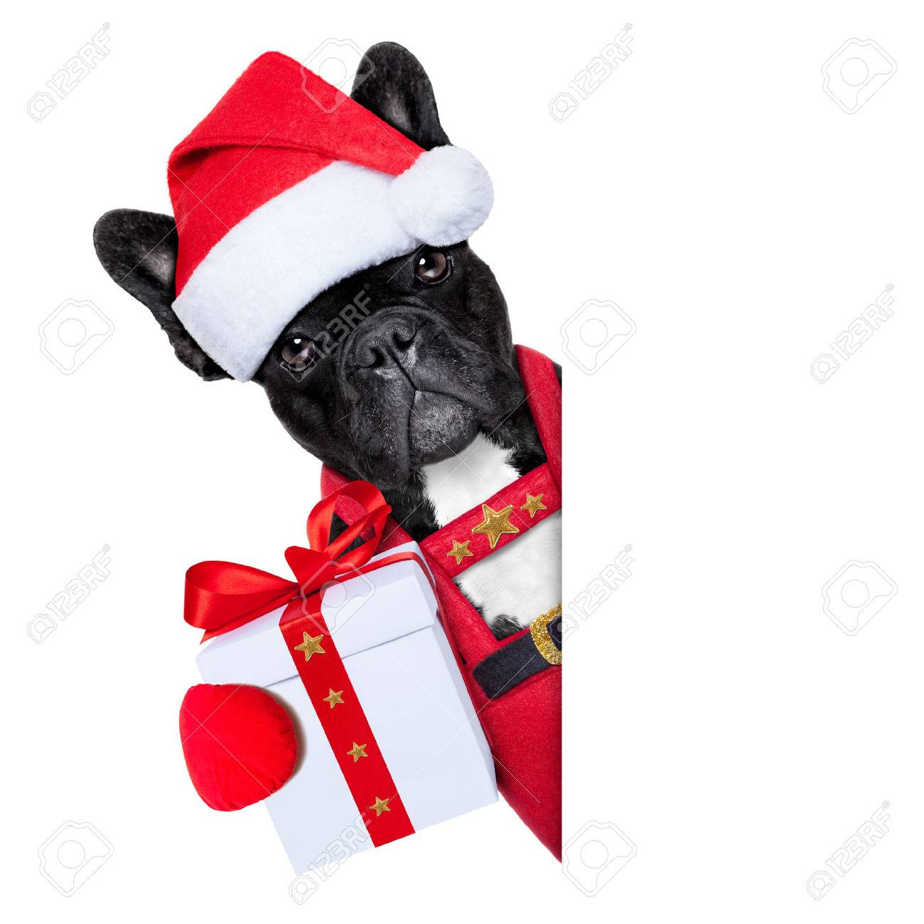 Santa claus christmas dog wearing a hat with a xmas gift or present for you , besides a white or blank placard, isolated on white background - 32645061